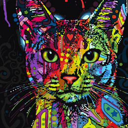 Абиссинская кошка - GX9868