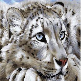 Амурский тигр - GX23620